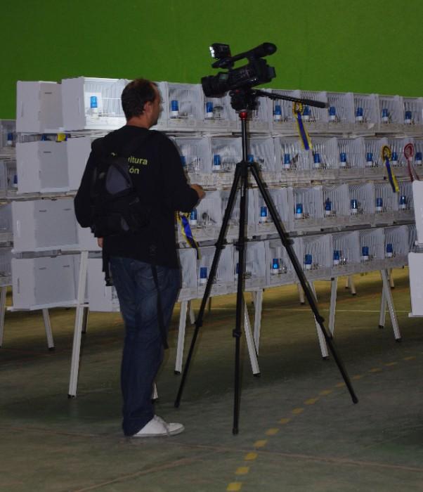 IMGP6524 CANARICULTURA TV
