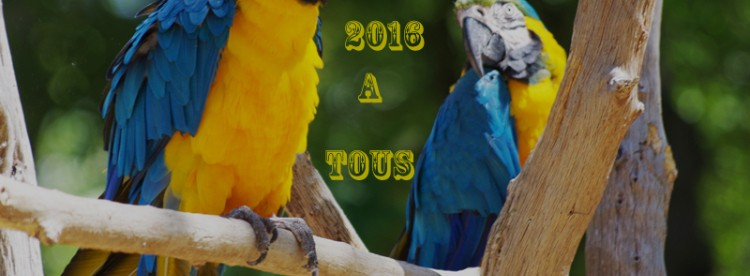 VOEUX 2016 800