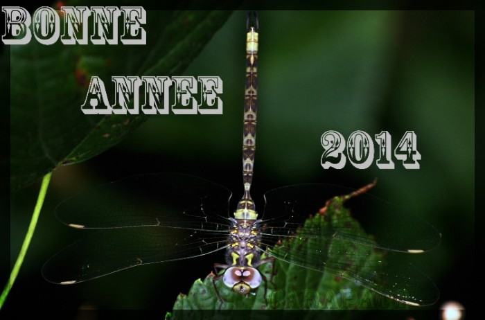VOEUX 2014 APDC